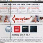 Free Assylum Acc